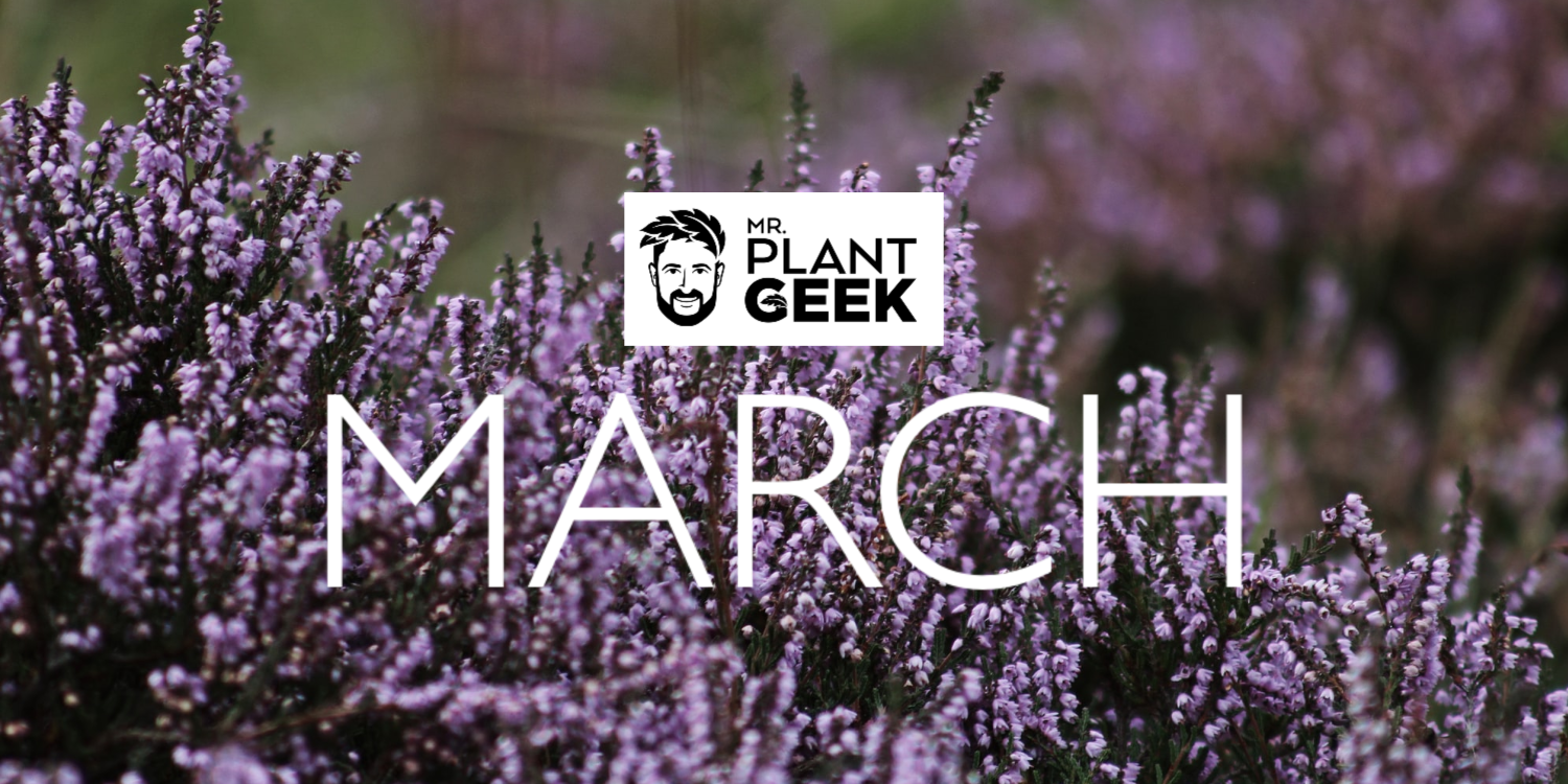 March GGT Blog Background Image